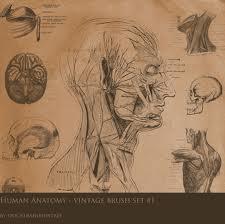 Resultados da Pesquisa de imagens do Google para http://phatbrush.com/wp-content/gallery/splatter/vintage_anatomy_set_1_by_fidgetresources.jpg
