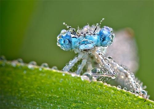 Stunning Images of Dragonflies Frozen in Time | Boost Inspiration