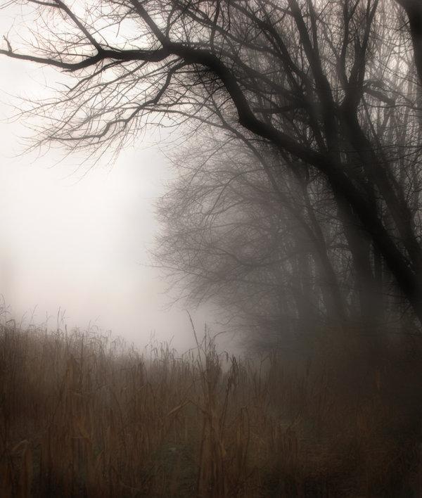 november fog by ~TheMangoCritic
