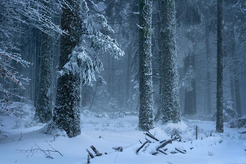 Frozen Forest by *FlorentCourty