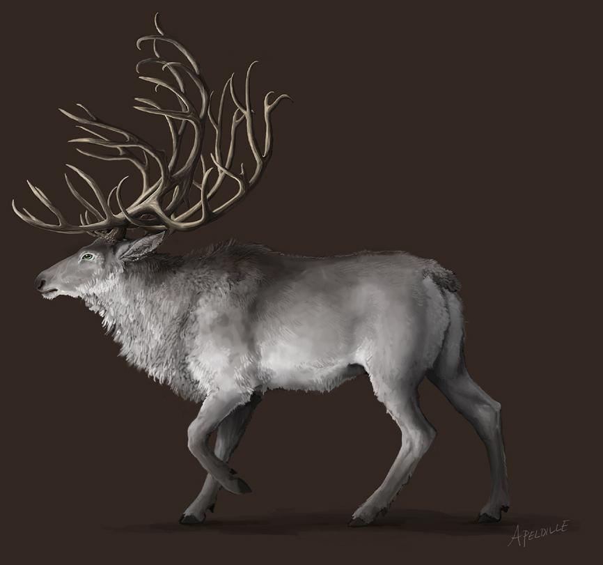 A Deer by *apeldille