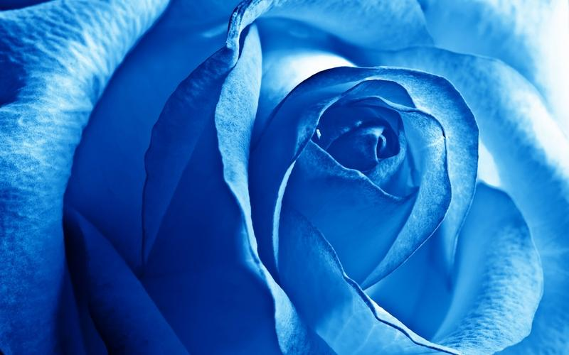 blue,flowers blue flowers 2560x1600 wallpaper – blue,flowers blue flowers 2560x1600 wallpaper – Flowers Wallpaper – Desktop Wallpaper