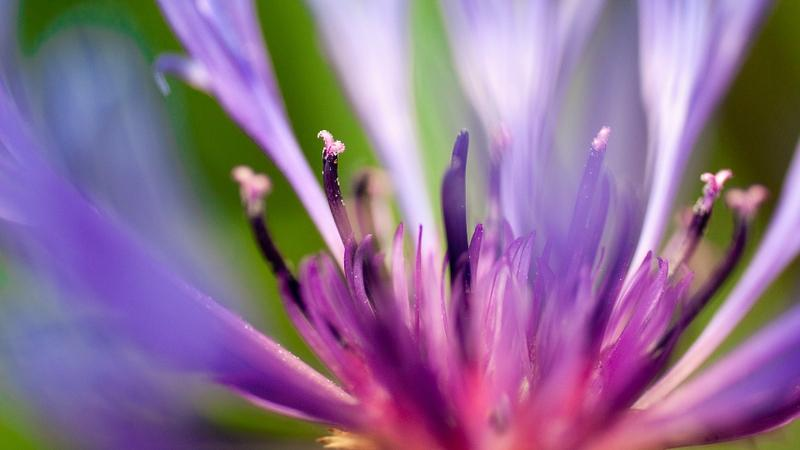 nature,flowers nature flowers macro depth of field flower petals 1920x1080 wallpaper – nature,flowers nature flowers macro depth of field flower petals 1920x1080 wallpaper – Flowers Wallpaper – Desktop Wallpaper