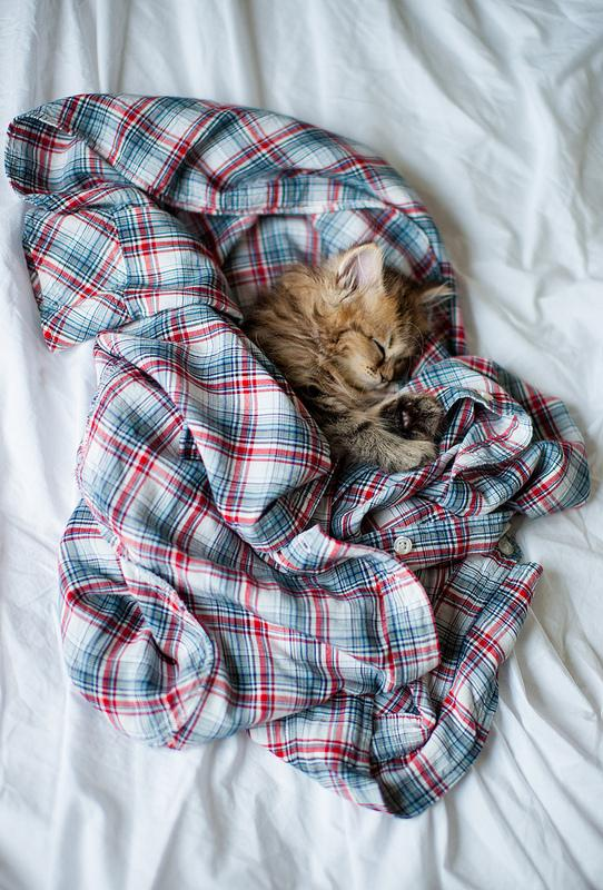 Probably the Best of World's Cutest Kitten | GenCept | Addicted to Designs