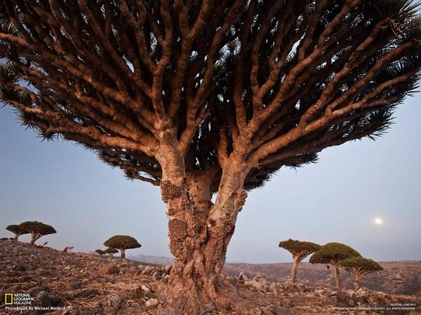 The best National Geographic photos of October