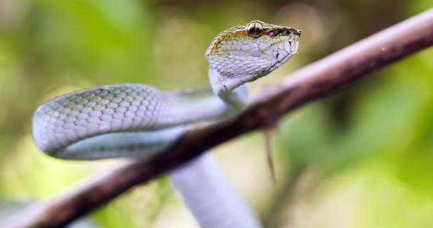 Treating a Garden Snake Bite | Home & Garden Ideas