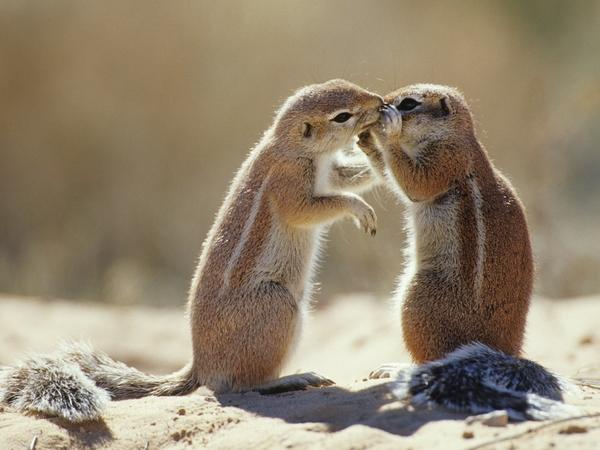 animals,squirrels animals squirrels south africa 1600x1200 wallpaper – Squirrels Wallpapers – Free Desktop Wallpapers