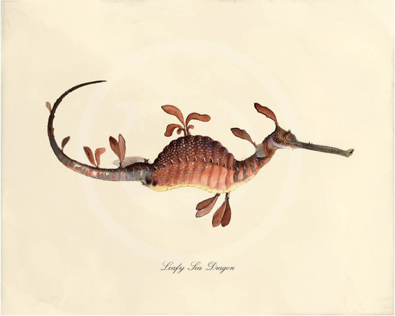 Antique Sea Horse Art Print 5x7 Sea Dragon by 1001treasures
