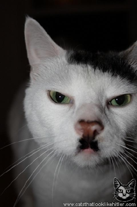 Cats that look like Hitler — Lost At E Minor: For creative people