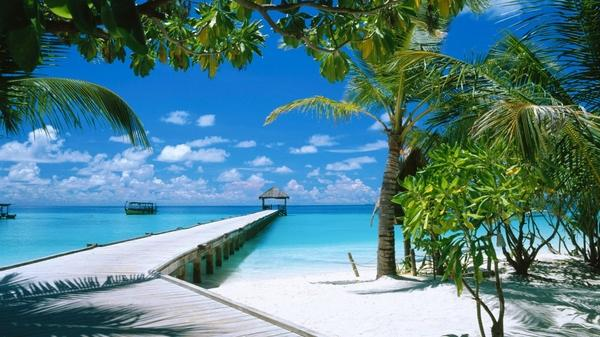 Oceanlandscapes Ocean Landscapes Beach Maldives Palm Trees Blue Skies 1920x1080 Wallpaper