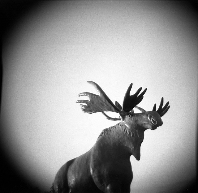 moose | Flickr - Photo Sharing!