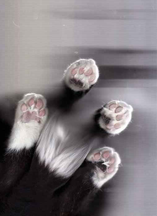 Scan je kat Â« Froot.nl