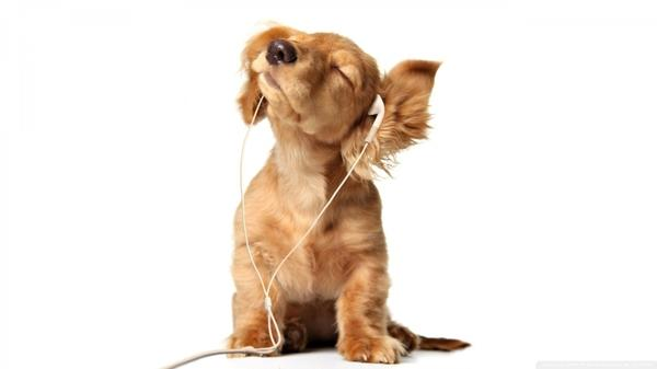 headphones,white headphones white animals dogs phones 1920x1080 wallpaper – headphones,white headphones white animals dogs phones 1920x1080 wallpaper – Dogs Wallpaper – Desktop Wallpaper