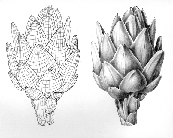 Botanical Art & Natural Science Illustration -Drawing Tips