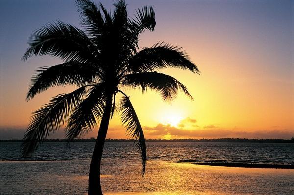tropical sunset palm tree - photo #13