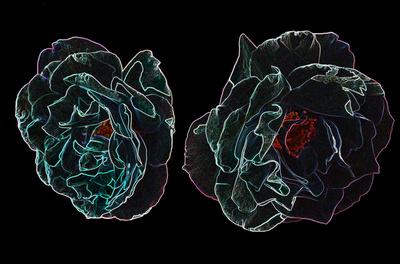Neon Roses Art Print by Fabian Sommer | Society6