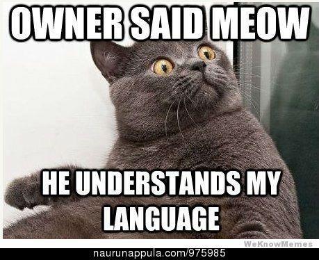 Itse puhun aina kissalle - hauskat kuvat - Naurunappula