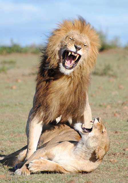 Pets & Wild Animals - 1 - tumblr_mdnge6INdV1reo5gco1_500.jpg - Minus