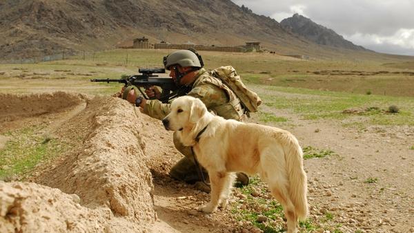 dogs,soldier soldier dogs aug 1920x1080 wallpaper – dogs,soldier soldier dogs aug 1920x1080 wallpaper – Dogs Wallpaper – Desktop Wallpaper