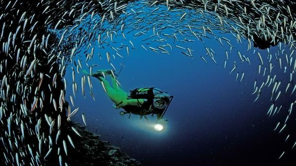 ocean,world ocean world scuba diving indian 1920x1080 wallpaper – Oceans Wallpapers – Free Desktop Wallpapers