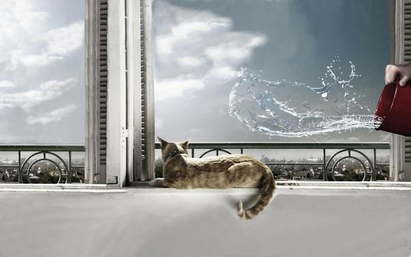 water,cats water cats 1920x1200 wallpaper – Cats Wallpapers – Free Desktop Wallpapers