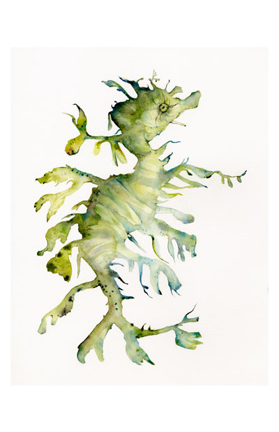 Leafy Sea Dragon Archival print of watercolor by amberalexander