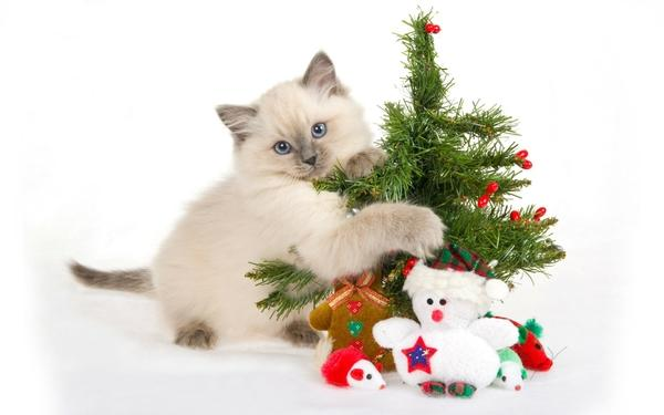 cats,animals cats animals christmas trees kittens pets white background 1920x1200 wallpaper – cats,animals cats animals christmas trees kittens pets white background 1920x1200 wallpaper – Pets Wallpaper – Desktop Wallpaper