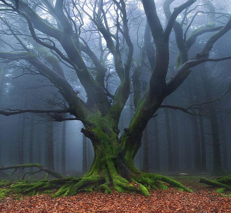 Prophotos.ru. Профессионально о фотографии - Деревья, туманы