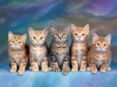cats animals 2560x1920 wallpaper – Cats Wallpaper – Computer Desktop Wallpapers