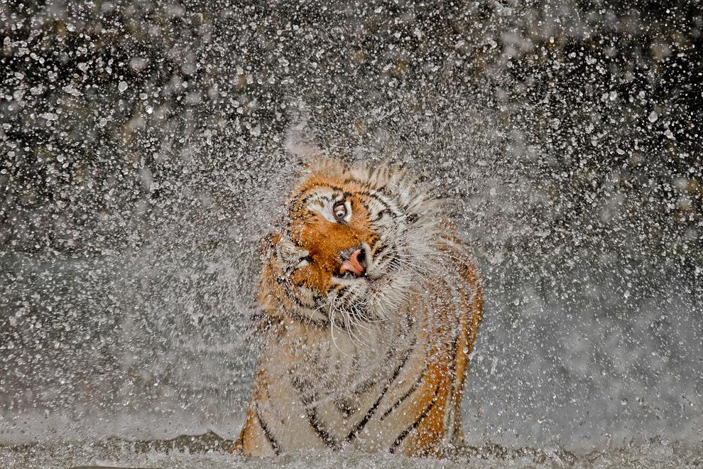 2012 National Geographic Photography Contest Winners - The Big Picture - Boston.com