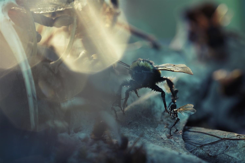 Home | Amon Tobin
