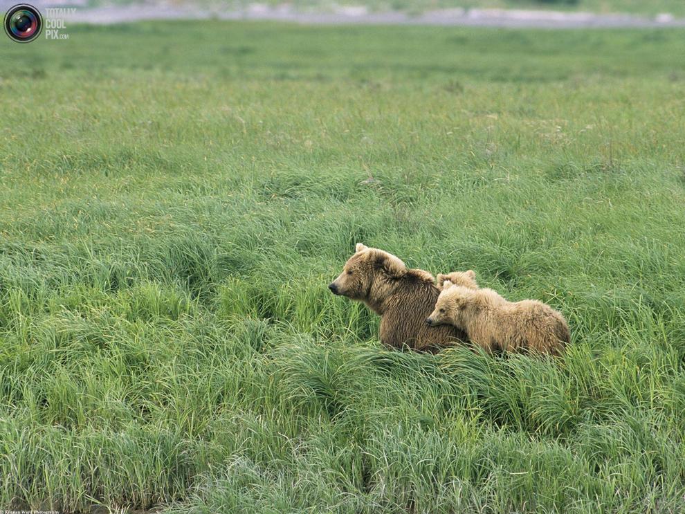 Эти удивительные животные : НОВОСТИ В ФОТОГРАФИЯХ