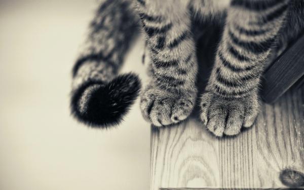 cats,animals cats animals 2560x1600 wallpaper – cats,animals cats animals 2560x1600 wallpaper – Cats Wallpaper – Desktop Wallpaper