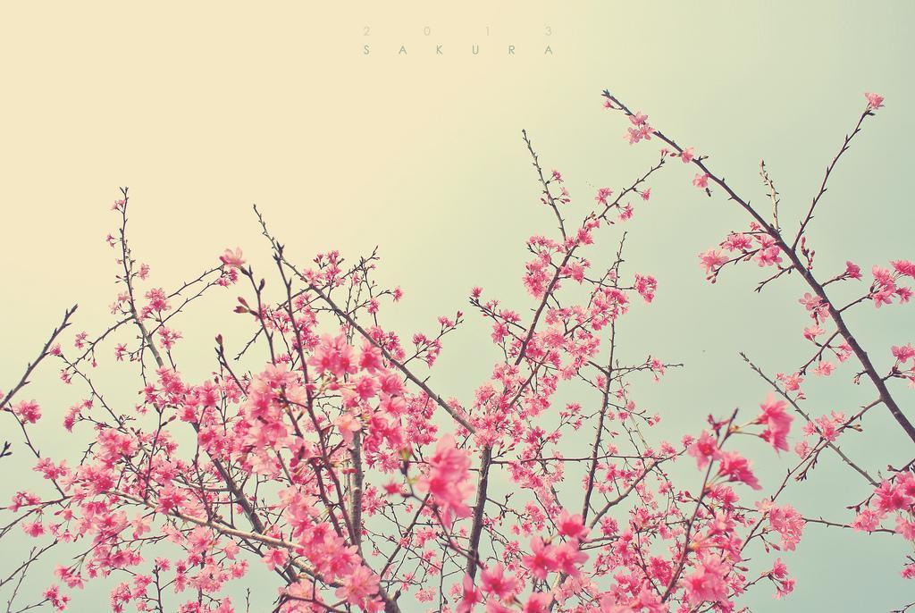 ? | Flickr – ?????