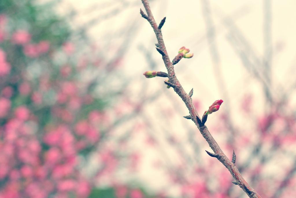 DSC_6723 | Flickr – ?????