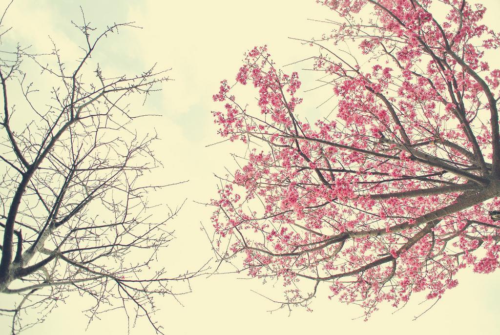 DSC_6783 | Flickr – ?????