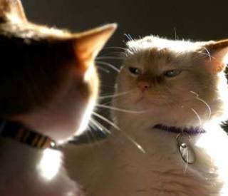 Cats Hub Page - Vetstreet