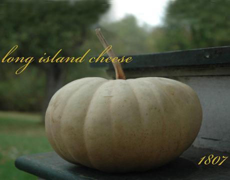 Heirloom Pumpkins and Heirloom Squash - Thanksgiving Squash - Halloween Jack-o-Lanterns - The Daily Green