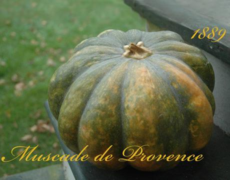 Heirloom Pumpkins and Heirloom Squash - Thanksgiving Squash - Halloween Jack-o-Lanterns - The Daily Green