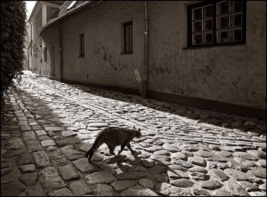 Фотография * photoline.ru