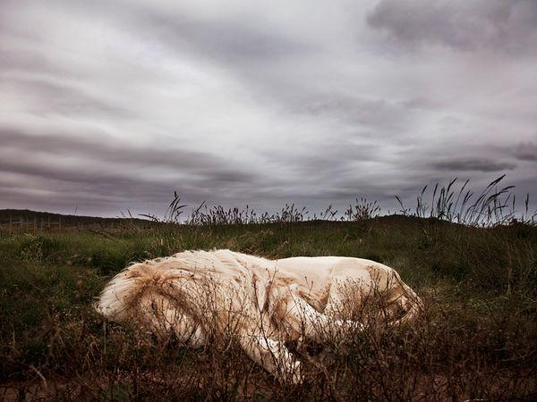 Photo of the Day: Best Pictures of January 2013, Gallery - National Geographic