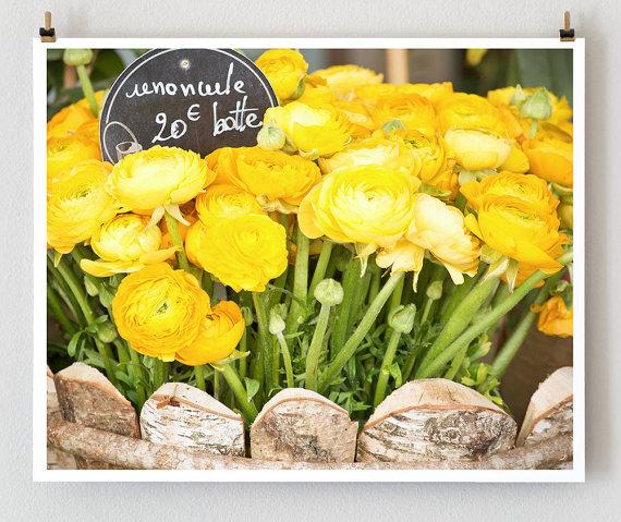 Yellow Ranunculus Paris 16x20 French Fine Art by littlebrownpen
