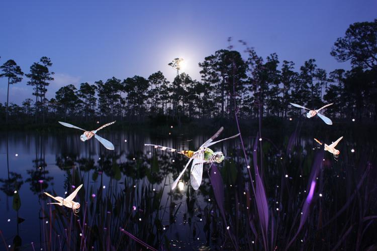 dragonflies_4.jpg (750×500)