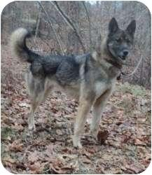 Adopt a Pet :: Minka - Louisville, KY - German Shepherd Dog/Husky Mix