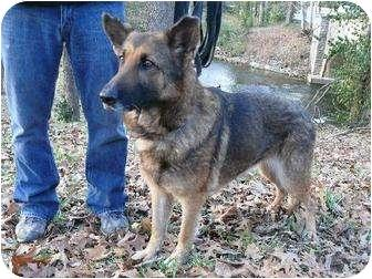 Adopt a Pet :: Lady - Brentwood, TN - German Shepherd Dog