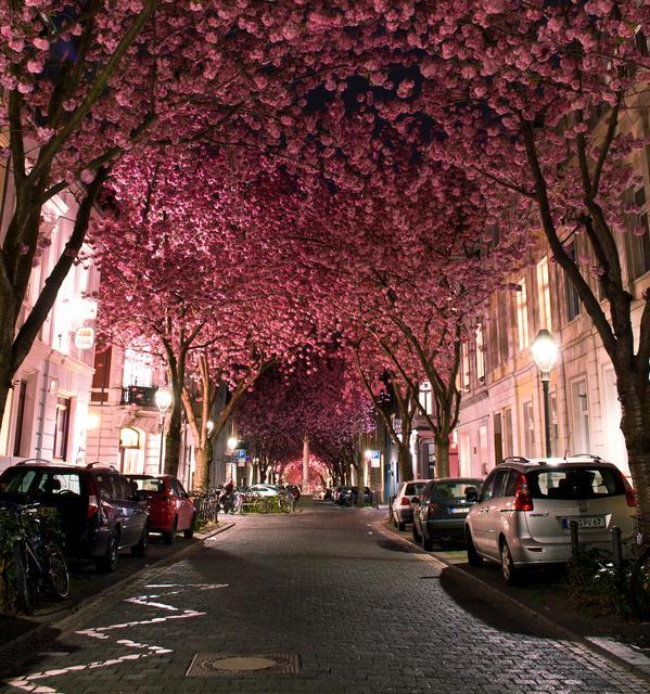 Spring Around the World: 25 Fascinating Cherry Blossom Photos | inspirationfeed.com