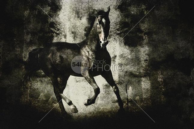 Galloping Horse on Dark Backround Texture - Animals Photography - 54ka StockPhoto