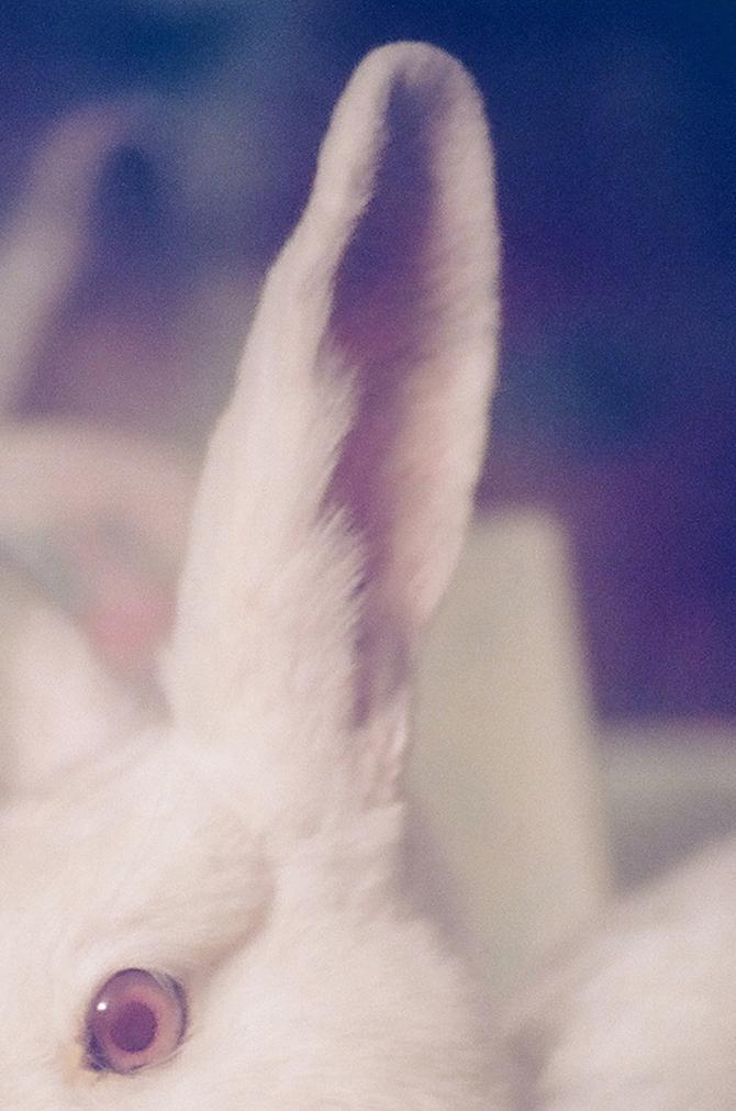 Bij de konijnen af | VICE