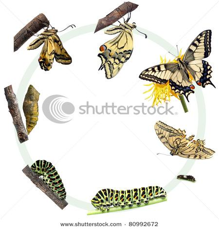 Animal & Wildlife Stock Photos : Shutterstock Stock Photography
