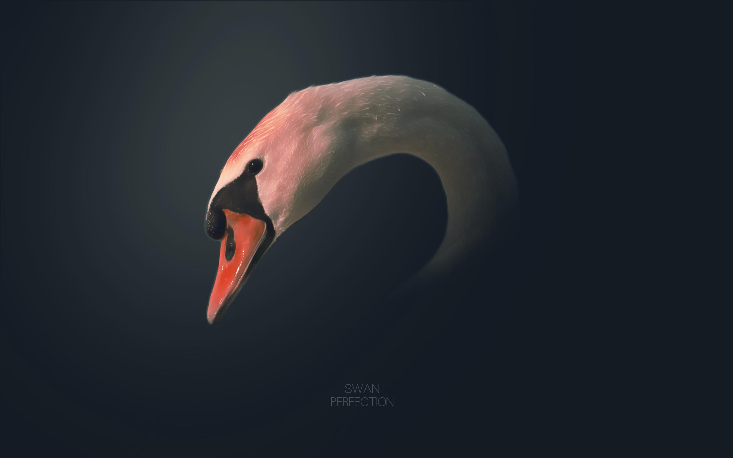 Swan perfaction by ~pleazart